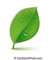 feuilles, vert, lustré