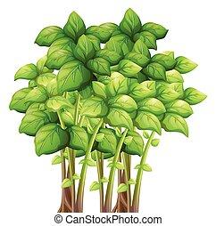 feuilles, vert, tas
