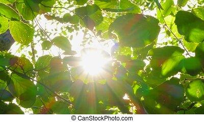 feuilles, vert, vent