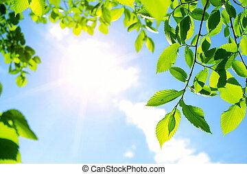 feuilles vertes, à, rayon soleil