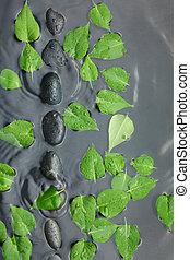 feuilles vertes, à, spa, pierres