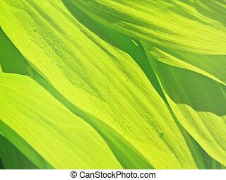 feuilles vertes, fond