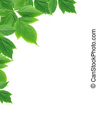 feuilles vertes, frontière