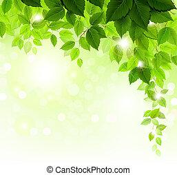 feuilles vertes