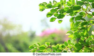 feuilles vertes, parc, gros plan