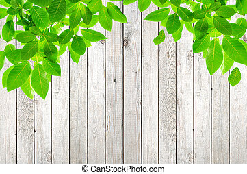 feuilles vertes, sur, bois, fond
