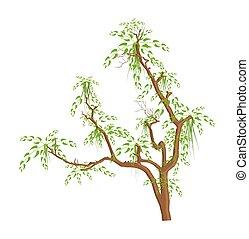 feuilles vertes, vecteur, arbre