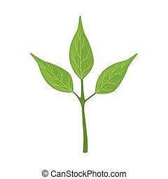 feuilles vertes, vecteur, arbre, illustration