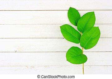 feuilles vertes, vue dessus, blanc, bois