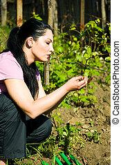 feuilles, vigne, printemps, femme, vérification, premier
