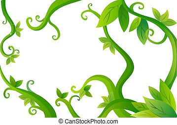 feuilles, vignes