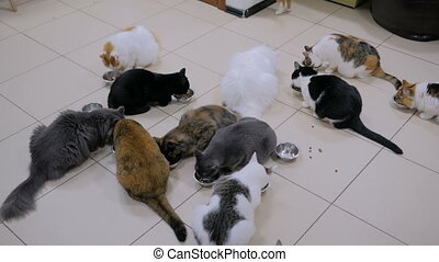 Few cats eating dry pet food together