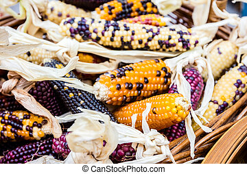 Few cobs of colorful corn in basket