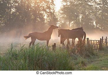 horses in mist at sunrise