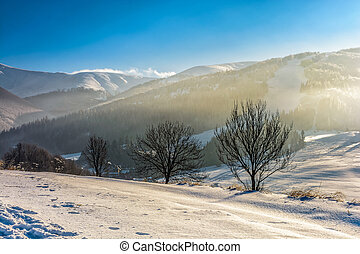 foggy morning in winter mountains - few naked trees on snowy...