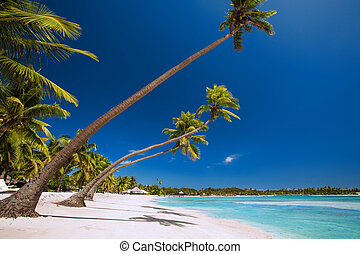 Few palm trees over tropical lagoon with white beach