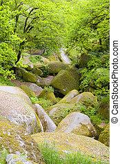few rocks - big rocks in a brittany forest