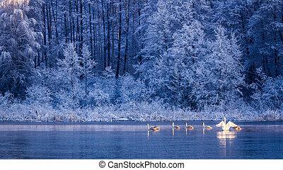 Few swans on frozen lake at sunrise