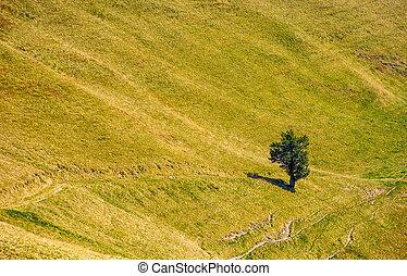 few trees on a mountain hill side - few trees on a hill side...