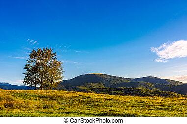 few trees on the grassy hillside at sunset in golden light....