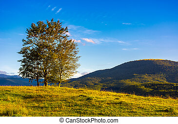 few trees on the grassy hillside at sunset in golden light....