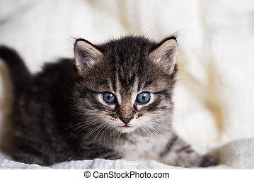 Few weeks old tabby kitten with fluffy fur