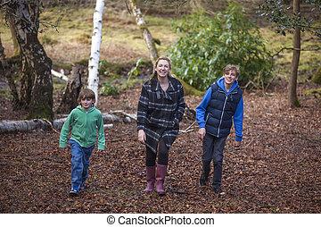 fiú, gyalogló, fiak, erdő, anya, gyerekek