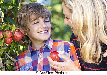 fiú, woman eszik, alma, gyermek, fiú, anya, feltörés