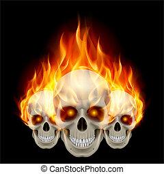 fiammeggiante, crani, tre