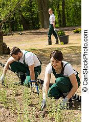 fiatal, kertész, dolgozó, alatt, egy, kert