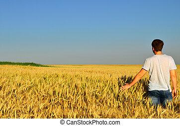 fiatalember, alatt, egy, árpa, mező
