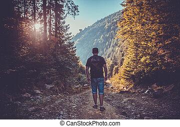 fiatalember, alatt, napnyugta, forest., utazás, életmód