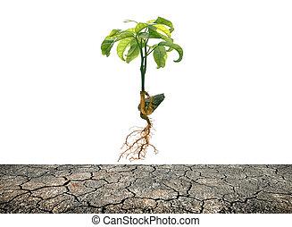 fibroso, suolo, radice, tabroot, crepa