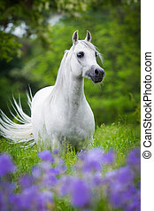ficar, cavalo, árabe, floresta