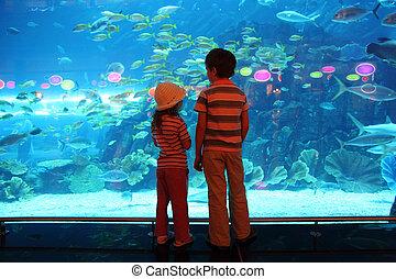 ficar, menino, pequeno, submarinas, túnel, costas, olhar, peixes, aquário, menina, vista
