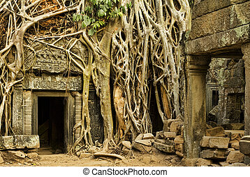 Angkor Wat - Ficus Strangulosa tree growing over a doorway...