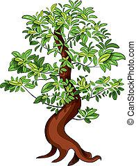 Ficus - Vector illustration of japan decorative ficus Bonsai