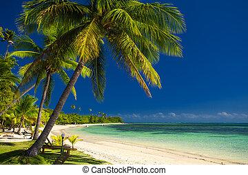 fidji, arbres, paume, plage blanche, sablonneux