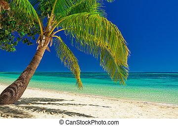 fidschi, insel, aus, baum, pazifik, plantage, ledig, handfläche, weißer strand, süden