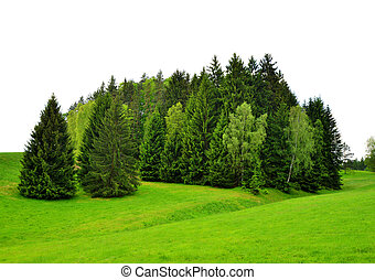 field., 格林樹