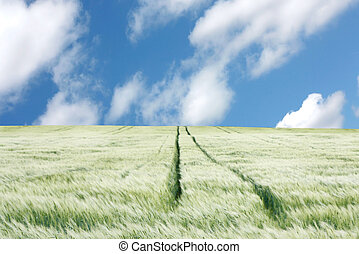 A green field with wheel tracks