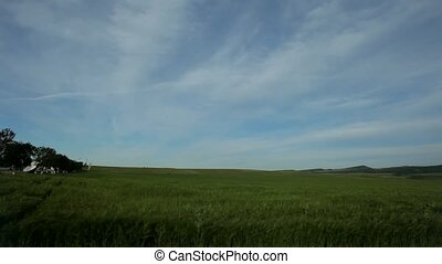 Field Against The Sky