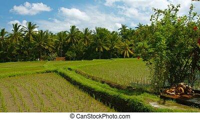 field., altar, indonesien, primitiv, bali, rand, reis