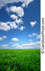 Field and a  blue sky