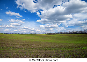 Field and cloudscape