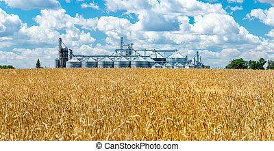 Field and elevator panorama