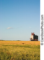 Field and elevator - Ripening wheat field with a large...