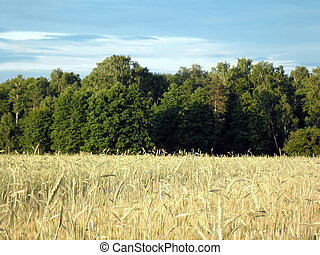 Field and forest. - Field and forest - summer rural...