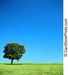 field and lonely tree