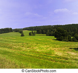 Field and meadow